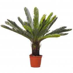 PLANTA ARTIFICIAL 90CM PALMERA BIGHOUSE